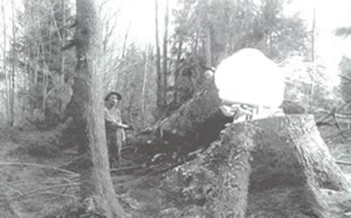 A logger and a felled tree