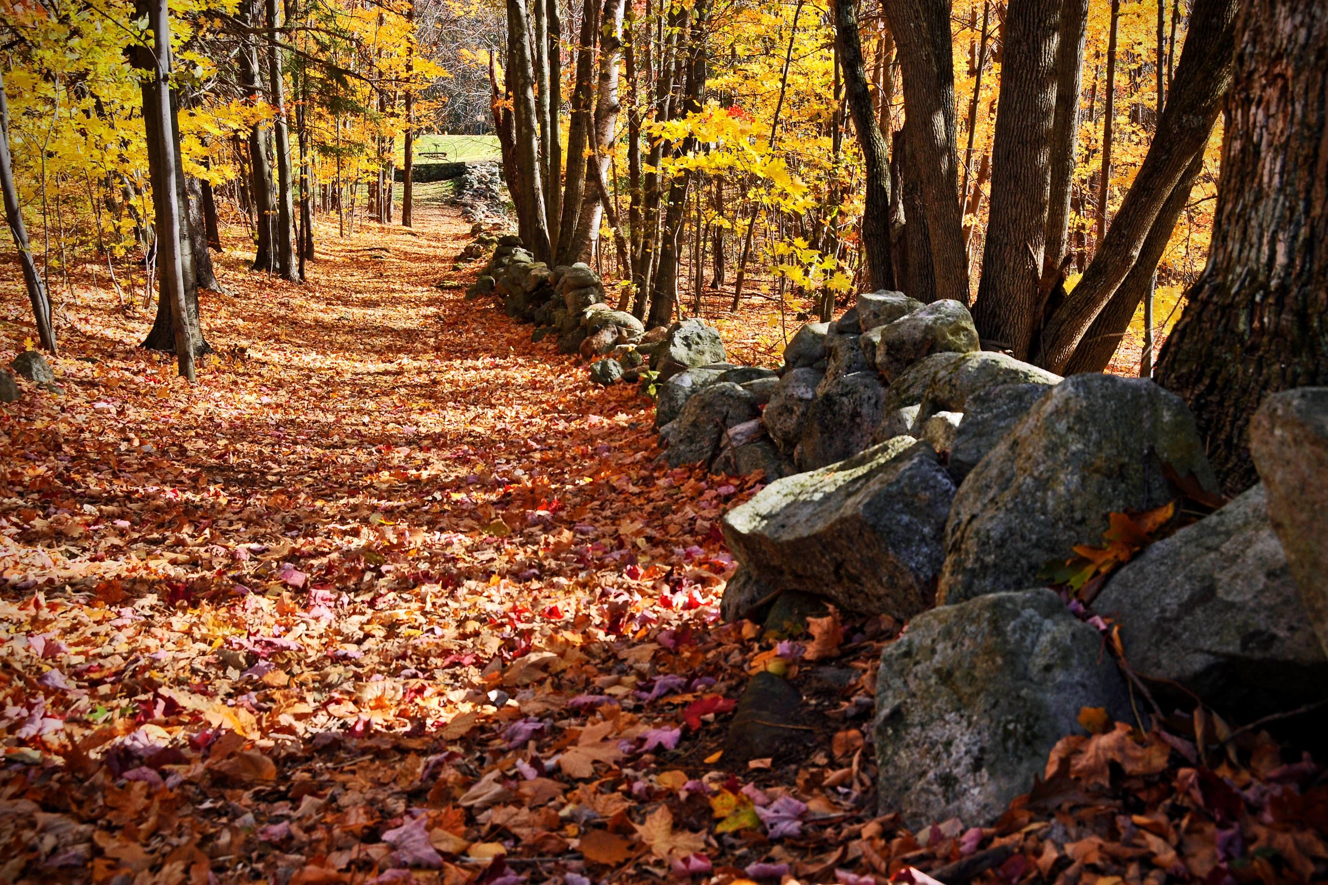 Fall Hiking Trail (Photo by Eric Anderson)