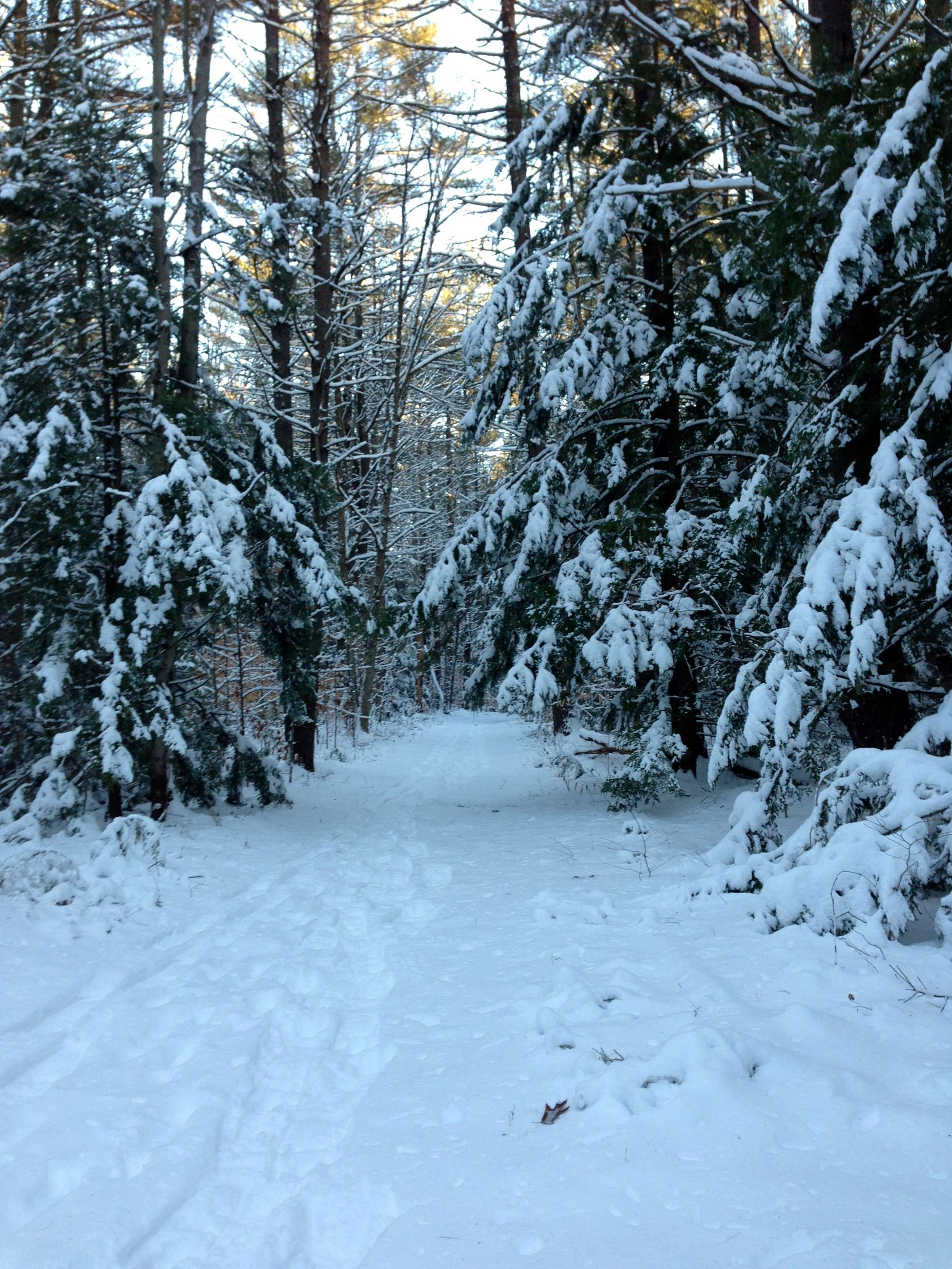 Snow covered trail through the forest, with snow-covered pine trees on either side.