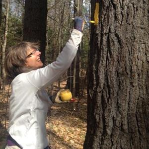 Woman painting a yellow mark on a tree.
