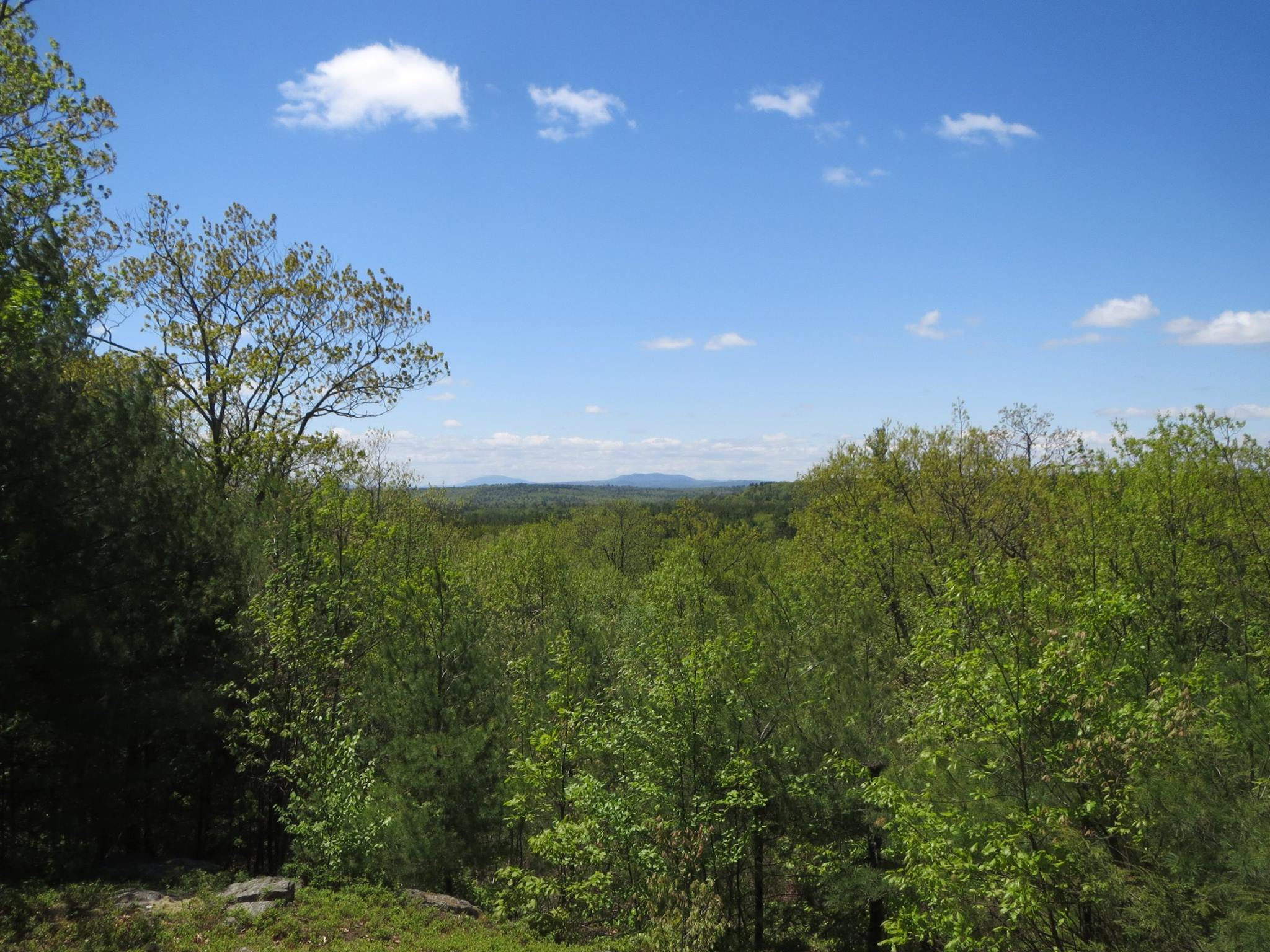 Landscape of trees, blue sky, a few wispy white clouds, and a small mountain in the distance.